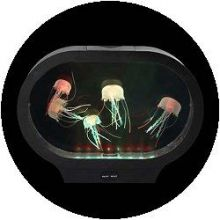 Aquarium - ovale Form mit Quallen