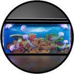 Quallen Aquarium - Groß
